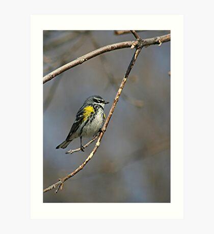 Yellow-rumped Warbler 2 Art Print