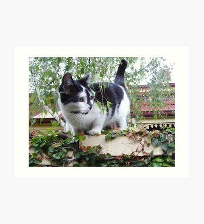 Toorak Cat Art Print