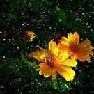 April Showers May Flowers by Rosalie Scanlon