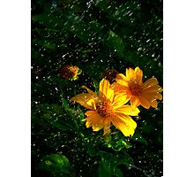 April Showers May Flowers Photographic Print