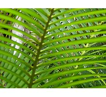 fern leaf Photographic Print