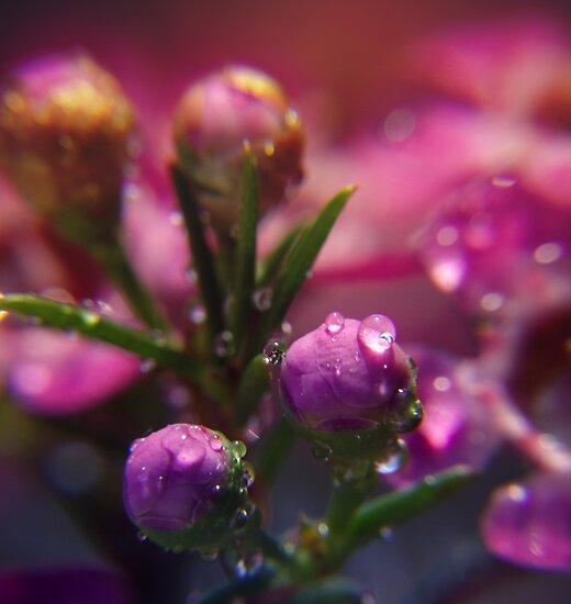 Springy. by Sherstin Schwartz