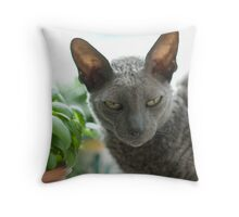 His Name is Uggy, and He's a Cornish Rex Throw Pillow