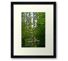 Cypress Lagoon Framed Print