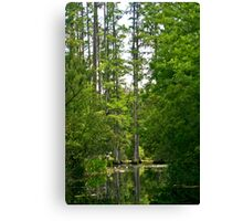 Cypress Lagoon Canvas Print