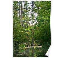 Cypress Lagoon Poster