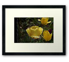 Tulip Sunshine Framed Print