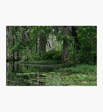 Swamp Reflections Photographic Print