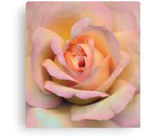Pastel pink rose Canvas Print