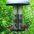 Many birds at the feeder by Judi Taylor