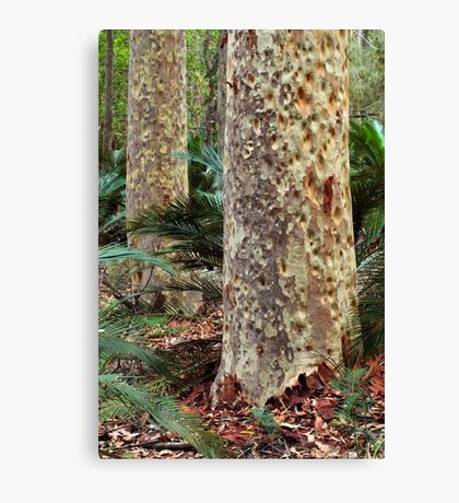 Spotted Gum - Mimosa Rocks National Park Canvas Print