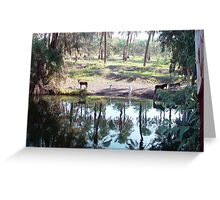 Donkeys drinking from the Jordan river Greeting Card