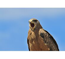 Yellow Billed Kite - Calling all Friends Photographic Print