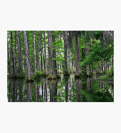 Springtime at Cypress Photographic Print