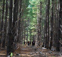 The Redbubble mushroom hunting Team by Princessbren2006