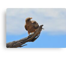 Yellow Billed Kite - Looking at Heaven Canvas Print