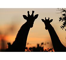 Giraffe Sunset - African Wildlife - Peaceful Tranquility Photographic Print