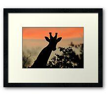 Giraffe Sunset - African Wildlife - Majestic Peace Framed Print