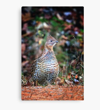 The Happy New Year Partridge Canvas Print