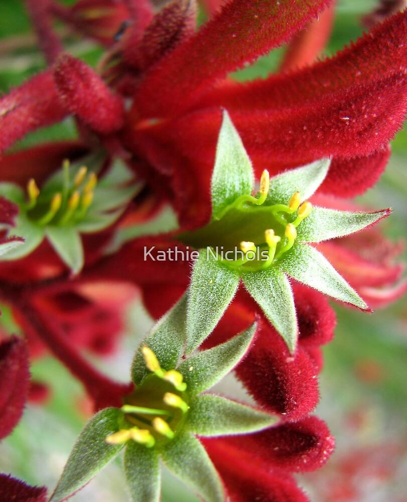 Kangaroo Paw by Kathie Nichols