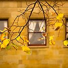 Autumn Colour by Anthony Davey