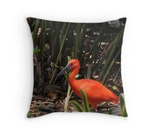 Scarlet Ibis 2 Throw Pillow