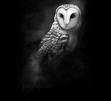 Owl by Mike Rigby