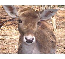 ~Precious Deer~ Photographic Print