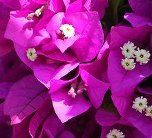 Cuban flowers by jdmphotography