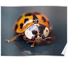 Macro Ladybug Poster