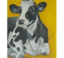 Cow Portrait Photographic Print