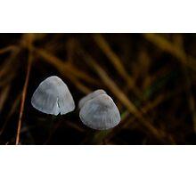 Pixie Hats Photographic Print