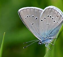 Farfalla by Krys Bailey