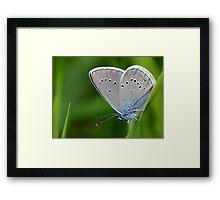 Farfalla Framed Print