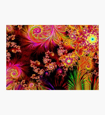 The Colours of Nature Photographic Print