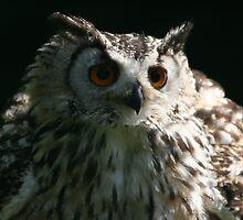 Owl by wingsyves