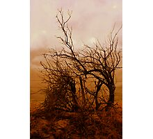 gnarly Photographic Print