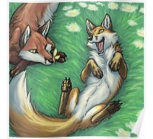 Playful foxes Poster
