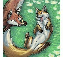 Playful foxes Photographic Print