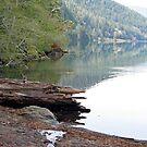 """Lake Crescent Shoreline"" by Lynn Bawden"