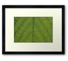 Leaf Veins Framed Print