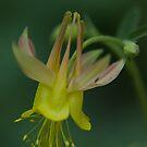 Rocky Mountain Wild Flowers by Daniel Doyle