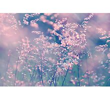 When the wind turns pink. Photographic Print