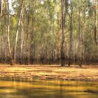 River Red Gum Heaven - Barmah-Millewa National Park - The HDR Experience by Philip Johnson