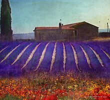 lavender meadows provence france by R Christopher  Vest