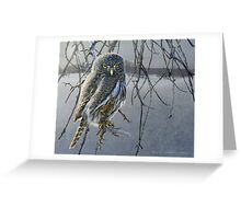 open country hunter: northern pigmy owl  Greeting Card