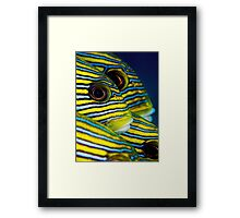 Eyes and Stripes Framed Print