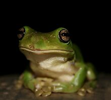 Frog by Janine  Hewlett