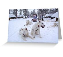Husky Sleighs - Lapland, Sweden Greeting Card