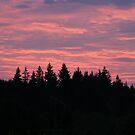 """""""Morning Sunrise"""" by Lynn Bawden"""